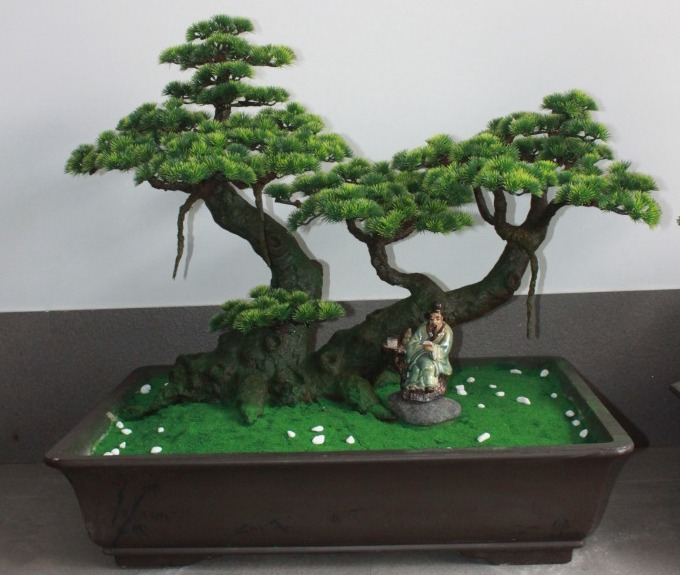 How To Make Bonsai Tree At Home